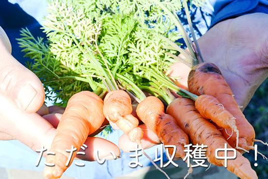 坂ノ途中の「ただいま収穫中!」