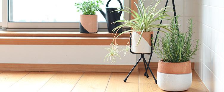 植木鉢&鉢スタンド