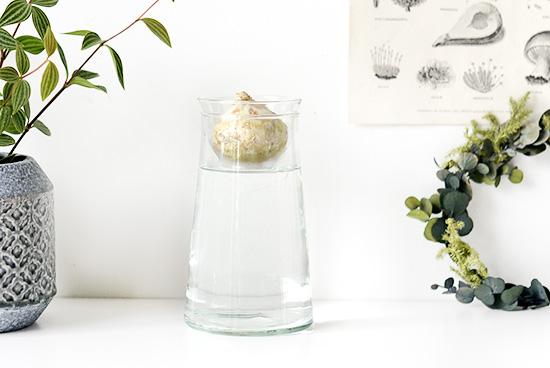 リューズガラス/球根ベース(ストレート型)の商品写真