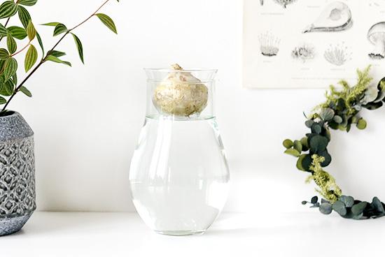 リューズガラス/球根ベース(丸型)の商品写真