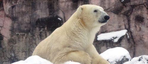 画像提供:セルコホーム ズーパラダイス八木山(八木山動物公園)