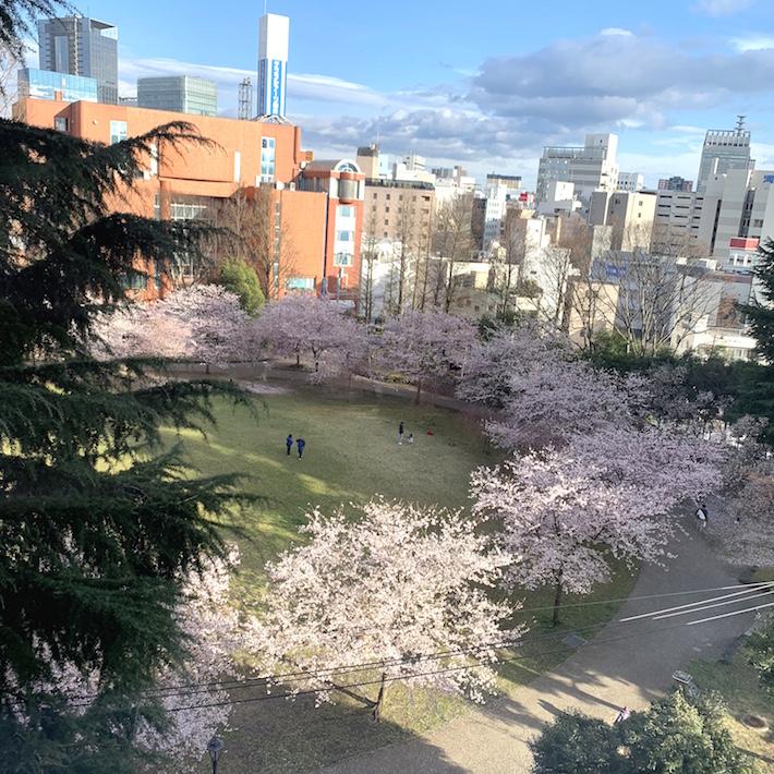 通りを挟んで西側すぐの錦町公園は、仙台の街中でいち早く桜が開花するお花見スポット。休日には家族連れの姿も多く、和やかな空気が流れる街中のオアシス的空間だ