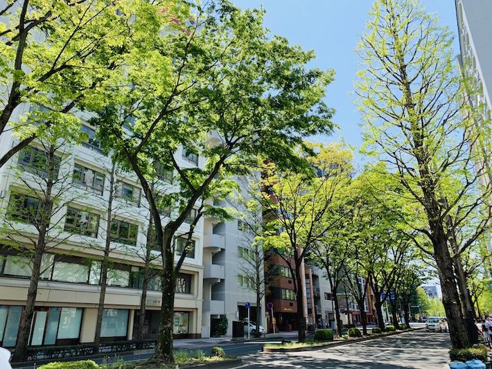 定禅寺通のケヤキ並木が芽吹くと街は一層美しく彩られ、気持ちのいい季節がやってくる