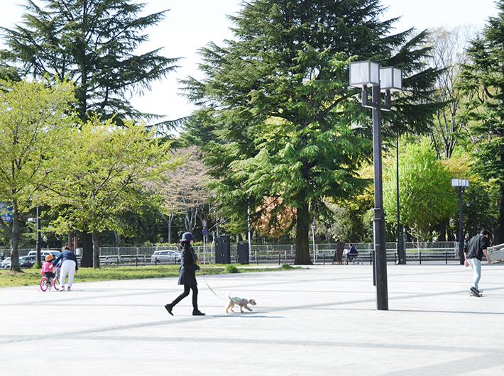 自然豊かで敷地の広い西公園は犬を散歩させるのにぴったり