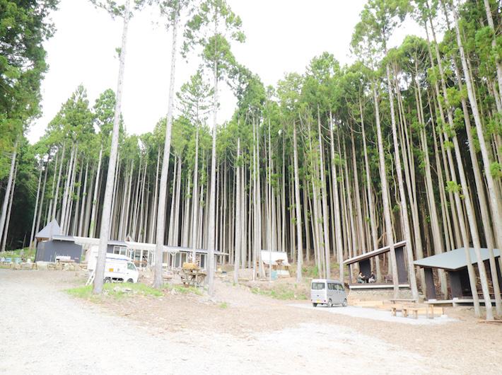 真っ直ぐ伸びる杉の木はもはやアート。