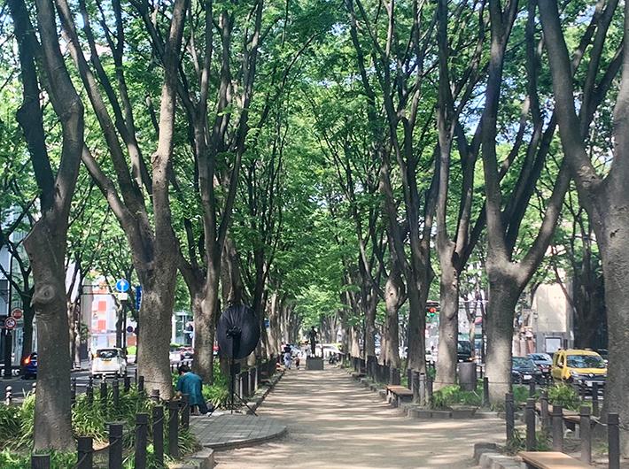 初夏の緑が美しい定禅寺通