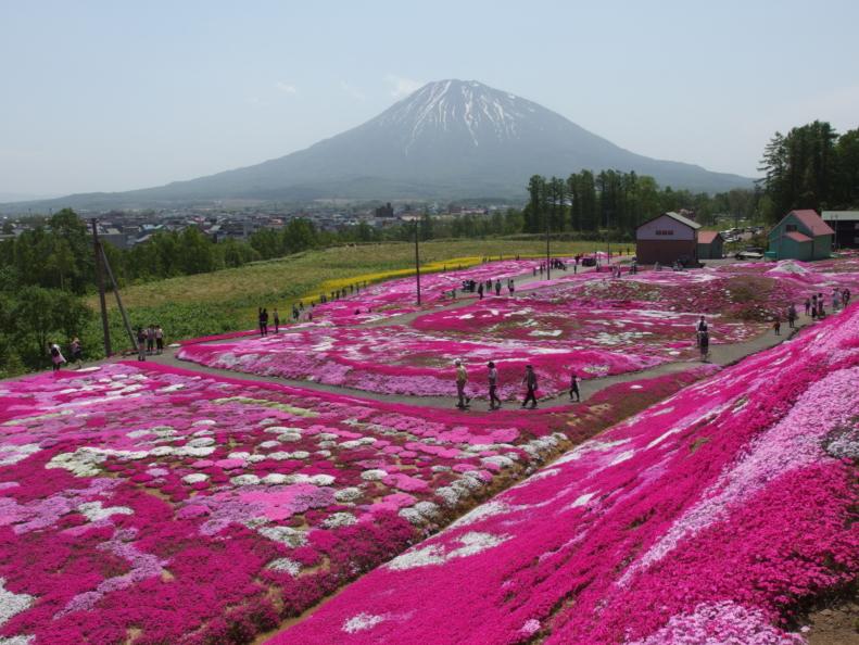 pink moss garden