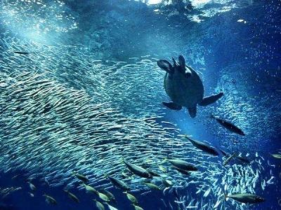 ★アクアワールド大洗水族館チケット付きバイキングプラン★観光スポットは巨大水族館で決まり!レジャー体験