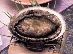 【活きアワビをお好みの調理法で】新鮮とれぴち満喫プラン♪ アワビを食べに来て下さい!