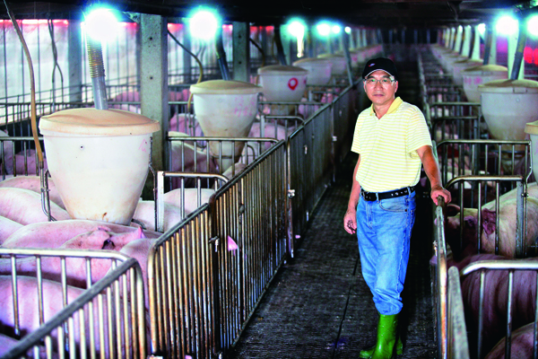 台灣豬農陳永雄的養豬場,養殖水準直逼丹麥。