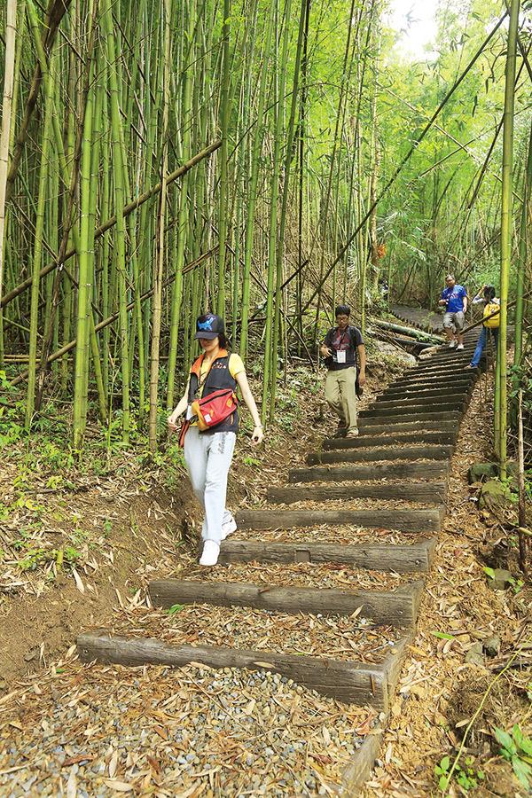 「小烏來水圳古道」有成片 竹林,風景清幽。