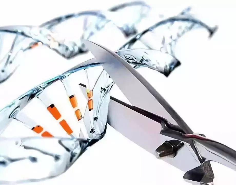 ▲如果人類胚胎基因編輯出錯了,結果可能會導致其它病變,想要把基因改回來,是不可能的。圖/ 網絡