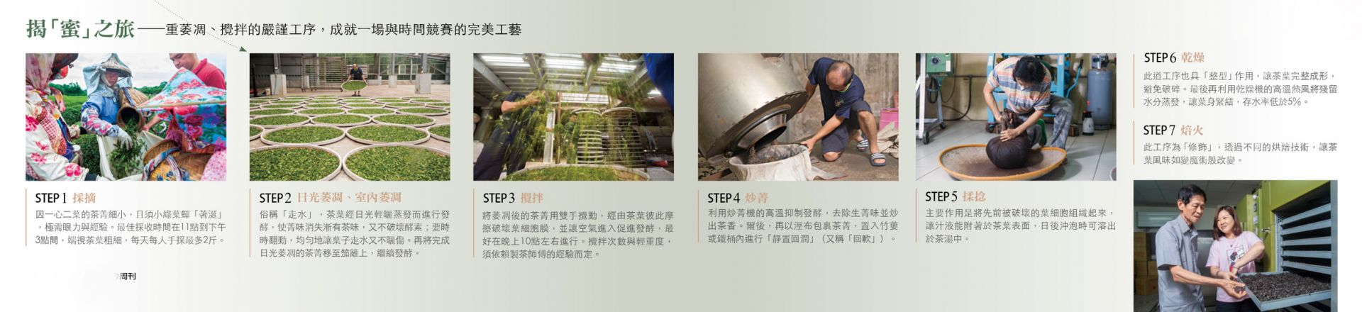 東方美人茶製作過程