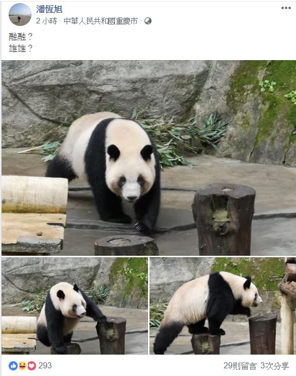 高雄觀光局長潘恆旭在臉書貼出3張熊貓照,引發外界揣測。