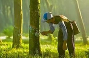 【インドネシア】天然ゴム産業、今年は業績改善を予測[農水](2019/04/22)
