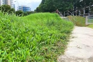 【シンガポール】デング熱が過去最多、さらに流行も[社会](2020/06/17)