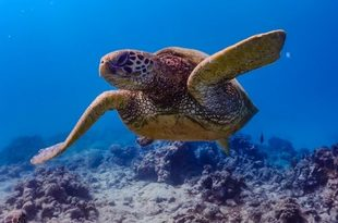 海は美しくアクティビティも揃って一日中楽しめる、そんな沖縄絶景ビーチ7選
