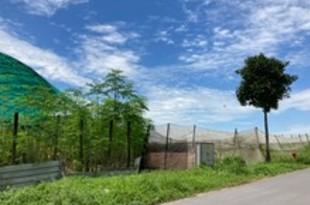 【シンガポール】北部をハイテク農業地区に、自給率向上へ[農水](2020/10/05)