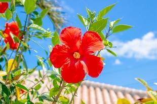 水入らずで沖縄を楽しみたい!沖縄の魅力的なプライベートホテル23選