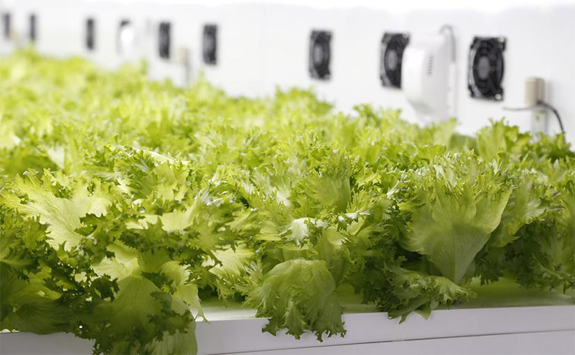 食料生産をAIが担う。植物を最速で育てる未来工場の姿 | Ledge.ai