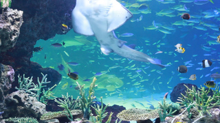 今だけ、あのグソクムシにも会える! 空前絶後の超絶癒し「サンシャイン水族館」