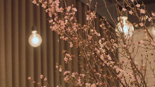 世界の食通に愛される味を、桜と共に。「DINING OUT SPECIAL SHOWCASE」