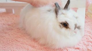 小動物と過ごす癒しタイム「もふもふ小動物カフェ4選」