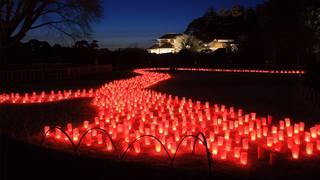 在春天降臨的日本三大名園內,享受「水戶梅花祭」美景