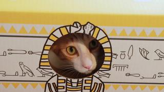 猫助けできる!「ネコリパブリック」ネコを虜にするグッズ