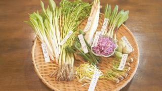 山菜の美味しい食べ方は?神楽坂「山塞」で食べるべき山菜料理