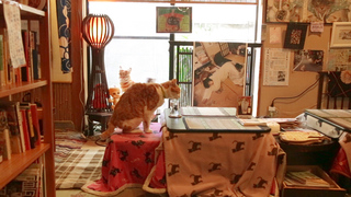 古民家カフェ×猫カフェ「ねんねこ家」の人気メニューをご紹介