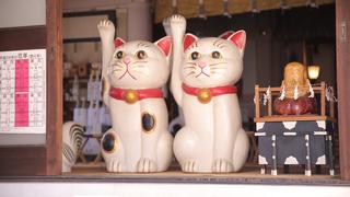 猫好き必見!まねき猫が迎える縁結びのパワースポット「今戸神社」