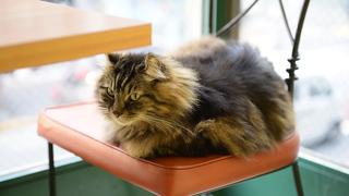 猫好き必見! 美猫一家が店番をつとめる紅茶専門店「ディー・カッツェ」