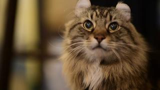 猫と優雅にティータイム♡ 紅茶専門店「ディー・カッツェ」 4匹の美猫一家