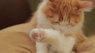 関西初上陸のおしゃれすぎる猫カフェ! 「猫カフェ MoCHA」で癒やされて。