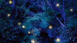 ふわりと蛍が舞う景色♡ 「ホテル椿山荘東京」初夏の風物詩「ほたるの夕べ ディナーブッフェ」
