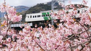 おすすめいちごスイーツに注目お花見スポットも!都内近郊で春を感じるイベント6選