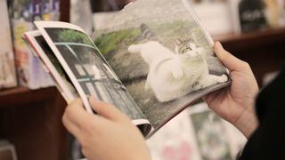 東京「猫本専門 神保町にゃんこ堂」のおすすめ猫本と猫グッズで癒やされて