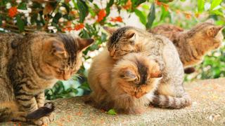 猫カフェ、猫パン、猫島まで。心癒される猫スポット6選