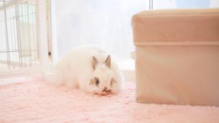 原宿でウサギさんをモフれる♡うさぎカフェ「Ra.a.g.f」
