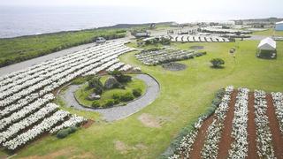 100万輪のテッポウユリが純白を作り出す「伊江島ゆり祭り」