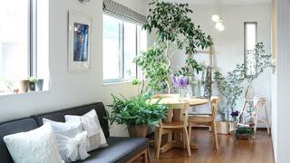朝から清々しい気分♪春に始める「観葉植物のある暮らし」3例