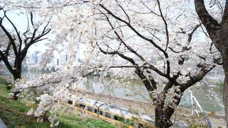 神楽坂でお花見するならここ。春らんまんの神楽坂散策スポット