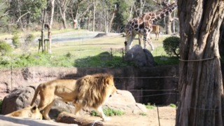 リアルな動物たちの世界を体感。大阪「天王寺動物園」