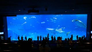 まるで海の中! 世界最大級の大水槽に感動がとまらない「沖縄美ら海水族館」