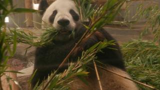 上野限定パンダと出合う。グルメから雑貨までキュートなパンダが大集合