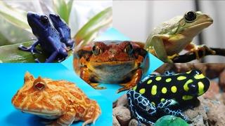 梅雨限定!カエルが池袋の平和を守るイベント「サンシャイン水族館 ケロレンジャー2018」