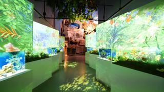 水族館アクアパーク品川でプロジェクションマッピング「FLOWER AQUARIUM BY NAKED –secret sea–」