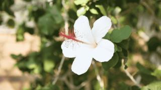 ハワイのお花に包まれる企画展。大阪「ハワイの植物展」