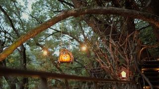 まるで秘密基地! 「星野リゾート リゾナーレ熱海」の樹齢300年のツリーハウス